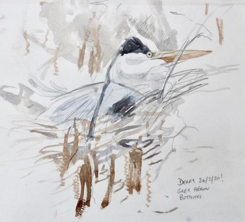 Derry-Nick-Grey Heron.jpg