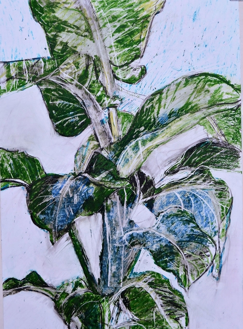 'Dieffenbachia' pastel work by David Douglas