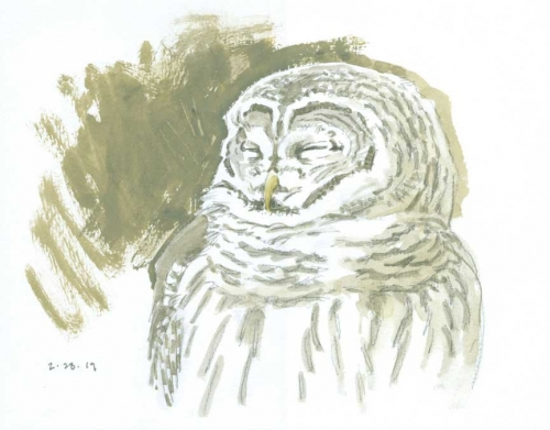 Dusen-Barry-van-Barred-Owl-Head-Study.jpg