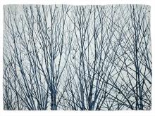 Evi-Trees.jpg