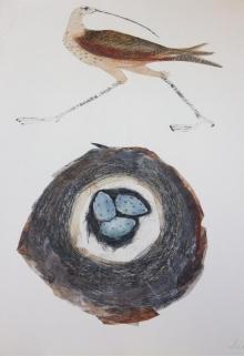 Forshall-Beatrice-Eskimo-Curlew.jpg
