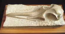 Goold-Madeline-Great Black Back Gull Skull.jpg