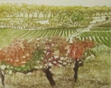 Halsby-Miranda-Autumn Vines, Nizas, Languedoc.jpg