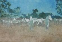 Halsby-Miranda-Horses in the Camargue.jpg