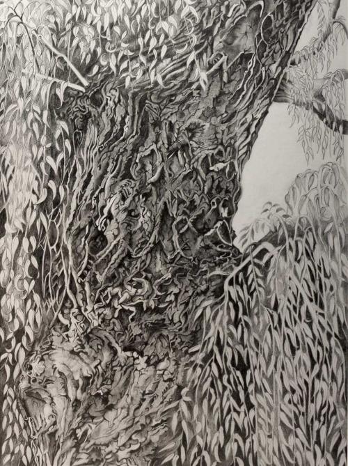 Jacs-Julia-Willow-Tree.jpg