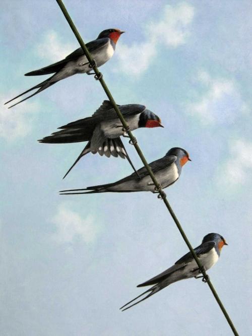 New-Turvey-Simon-Swallows.jpg