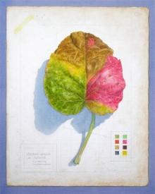 Offord-Robert-Bergenia Notebook.jpg