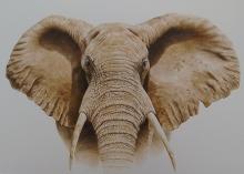 Parry-David-Masai Mara Bull Elephant.jpg