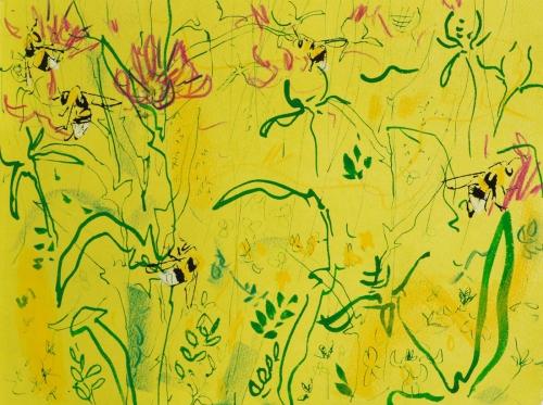 Pollard-Nik-White-tailed-bumble-bee-and-knapweed-4.jpg