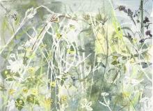 Porter-Rachel-Common carder bee on marsh thistle.jpg