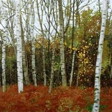 Sidaway-Ian-Silver-Birch-Esher-Woods.jpg