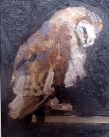 Study Of a Barn Owl.jpg