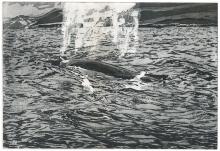 Wallbank-Christopher-Humpback Whale.jpg