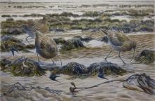 Warren-Michael-Curlews-&-Swallows'-watercolour-49x73-cm.jpg