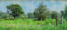 West Woodhay Meadow.jpg