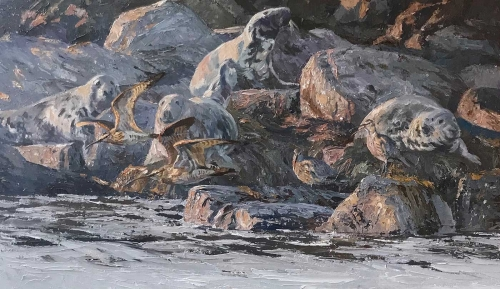 Wootton-Tim-Last-Light-of-a-Summer-Day---Curlews-and-Grey-Seals-on-Switha..jpg