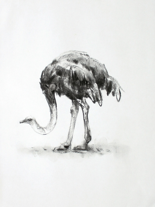 """Ostrich"" Charcoal on Paper by Lucie Geffré"