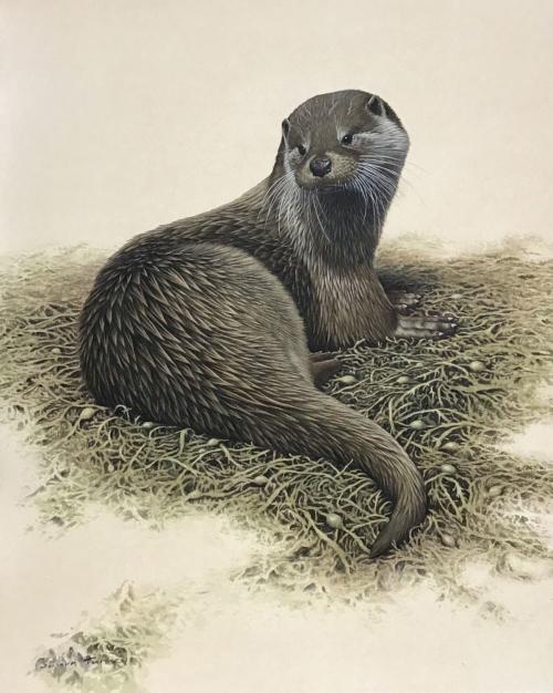 """Otter"" Watercolour by Simon Turvey"