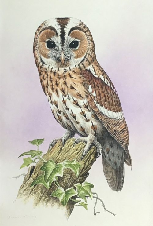 Simon-Turvey-Tawny-Owl.jpg