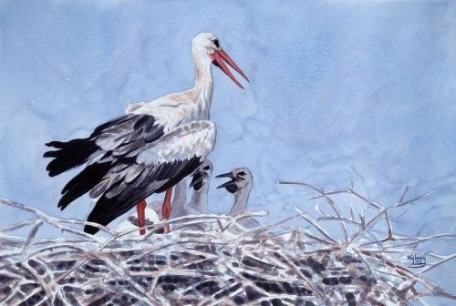 White Stork Family Szabolcs-Kókay