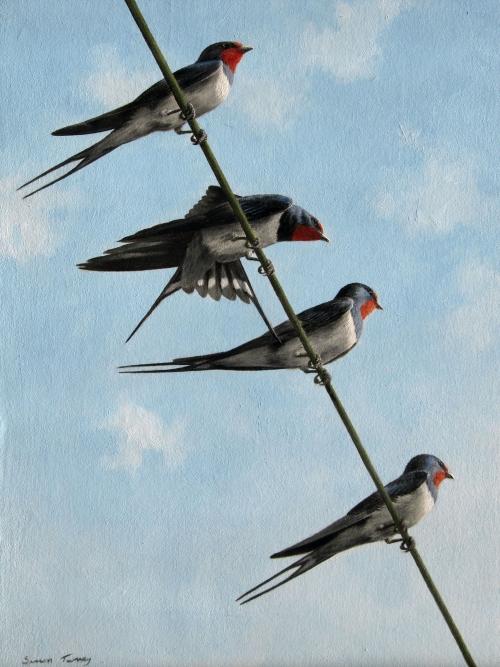 Simon Turvey, Swallows on a wire