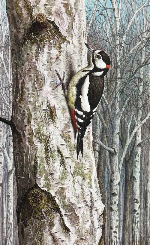 Great Spotted Woodpecker by Simon Turvey