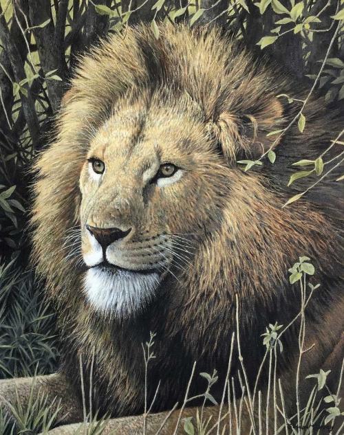 Turvey-Simon-Lion-Masai-Mara-WEB.jpg