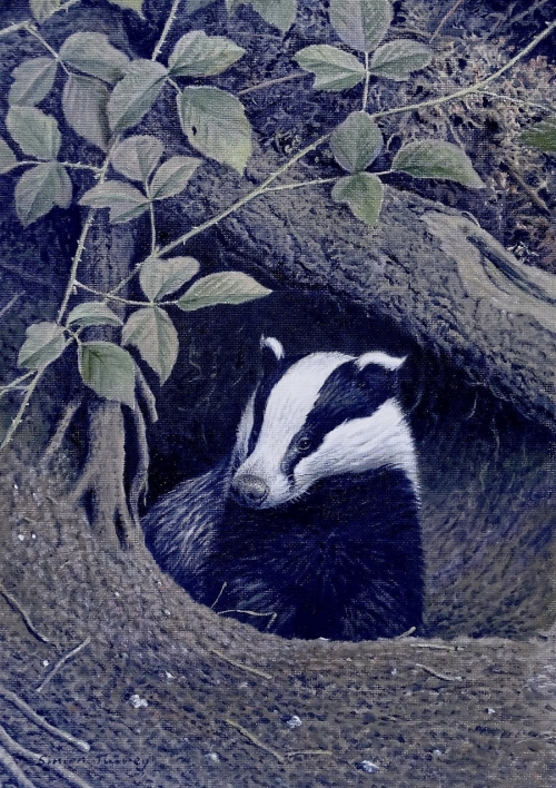 WEB Simon Turvey - Badger.jpg