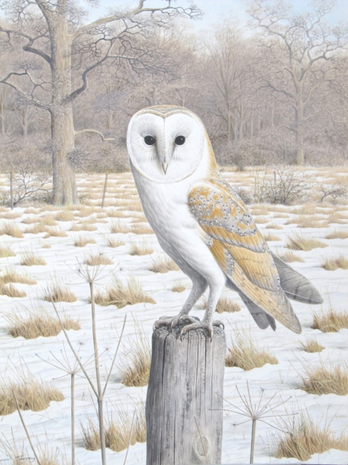 """Barn Owl in Winter"" Watercolour on Paper by Simon Turvey"
