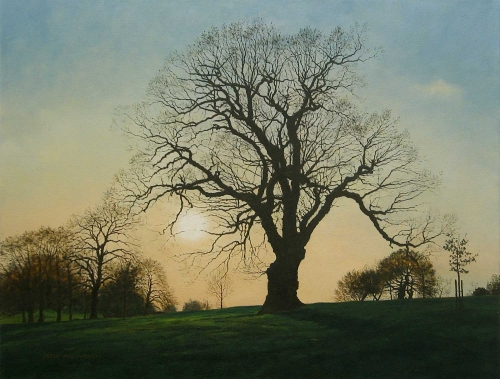 """Spring Oak, Evening Light"" Oil on Canvas by Mark McLaughlin"