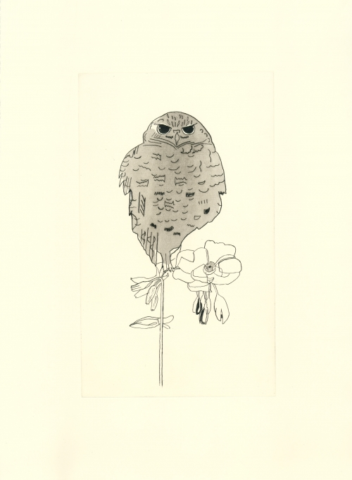 """Owl on a Flower"" Etching/Aquatint by Jack Haslam"