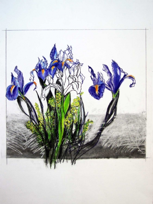 'Purple Iris' pastel work by Karen Stone