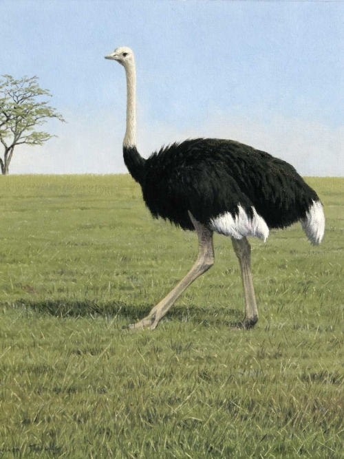 """Ostrich, Kenya"" Oil on Board by Simon Turvey"