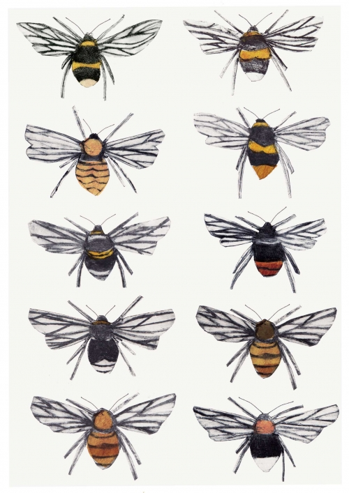 British Bumblebees by Beatrice Forshall