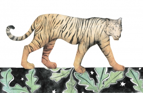 Tiger by Beatrice Forshall