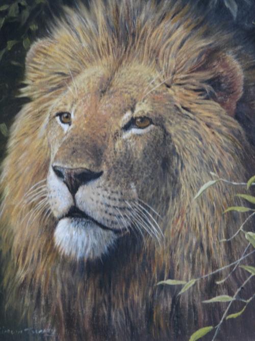 Lion, Masai Mara by Simon Turvey SWLA