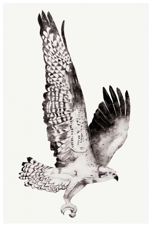 Osprey by Beatrice Forshall