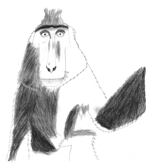 macac 3.jpg