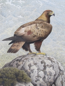 Simon Turvey, Golden Eagle