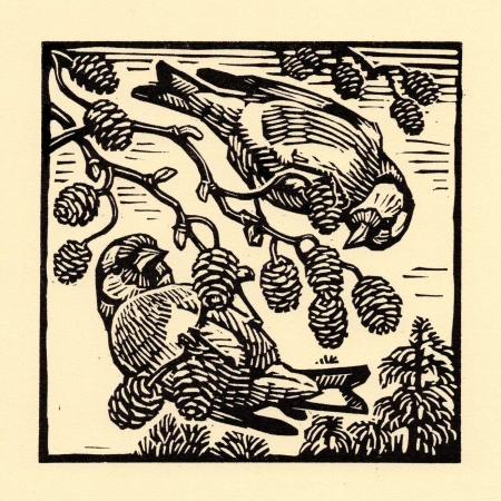 Richard Allen SWLA Goldfinches