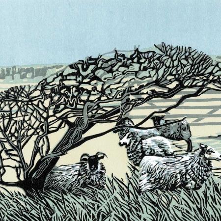 Max Angus SWLA Little Flock