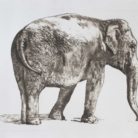 """""""Elephant"""" Drypoint engraving by Lucie Geffré"""