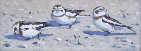 Allen-Richard-Snow-Buntings.jpg