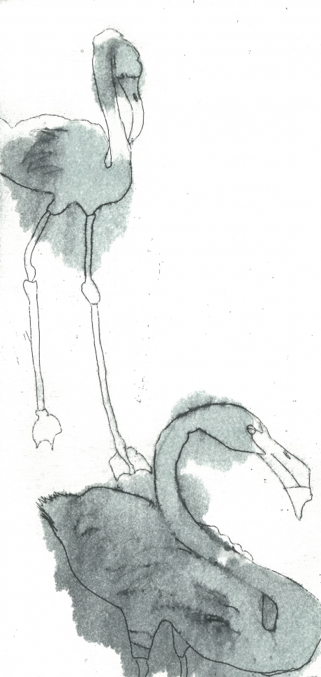Haslam-Jack-Flamingo.jpg