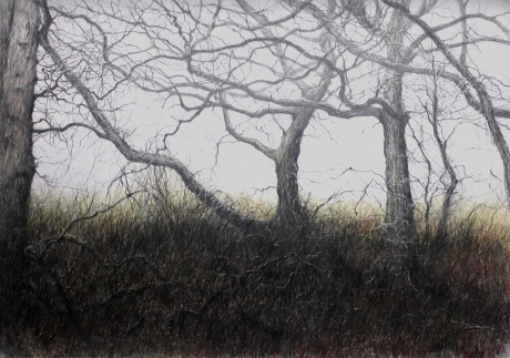 Brammeld-David-Tangled-Wood.jpg