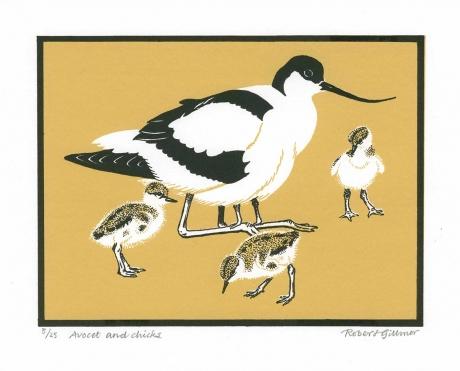 Gillmor-Robert-Avocet-and-chicks.jpg