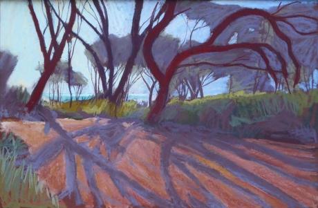 Campion-Sue-Tasmanian-Shadows.jpg