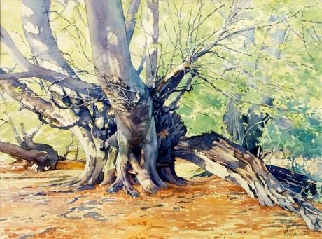 Robinson-Brian-Beech tree-summer.jpg