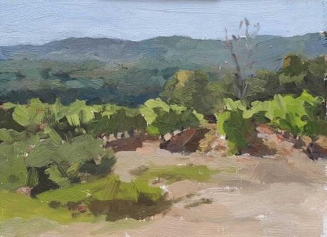 Teale-Lotta-Late-Morning-Vineyard,-Vaucluse.jpg
