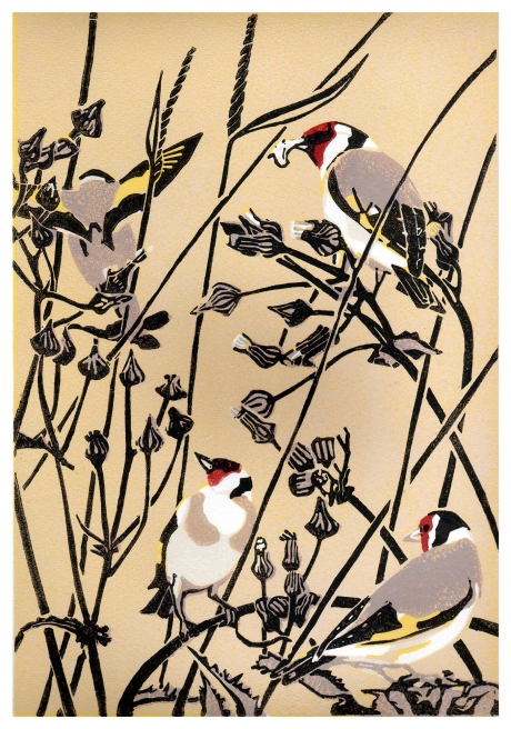 Angus-Max-Goldfinches-and-groundsel.jpg